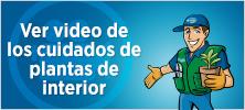 video_plantas_interior